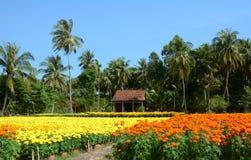 Kwiatów pola w Mekong delcie, południowy Wietnam zdjęcia stock