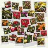 kwiatów polaroidy Obrazy Stock