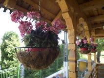 Kwiatów puchary przy Pasarea monasterem, Rumunia Fotografia Royalty Free