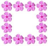 kwiatów ramy menchie Obraz Royalty Free