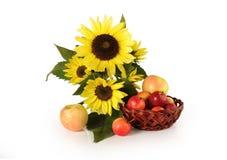 Kwiatów słoneczniki i dojrzali jabłka na białym tle Obrazy Stock