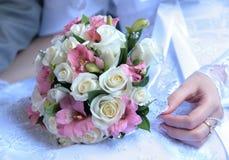 kwiatów target1220_1_ Obraz Stock