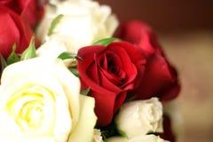 kwiatów target1486_1_ obrazy stock