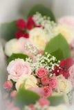 kwiatów target1492_1_ Fotografia Stock