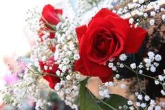 kwiatów target2215_1_ Zdjęcia Stock