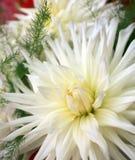 kwiatów target262_1_ obraz royalty free