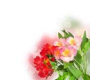 kwiatów wiosna biel Zdjęcia Royalty Free