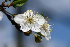 kwiatów wiosna biel zdjęcie stock
