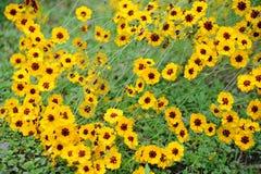 kwiatów wiosna kolor żółty Zdjęcie Stock