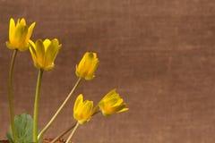 kwiatów wiosna kolor żółty Obraz Royalty Free