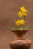 kwiatów wiosna kolor żółty Zdjęcie Royalty Free