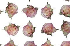 kwiatów wzorów róże sześć wariantów obrazy royalty free