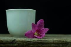 kwiatów zephyranthes menchie na czarnym tle A jaskrawym - zielony sta Zdjęcie Stock
