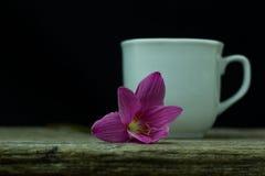 kwiatów zephyranthes menchie na czarnym tle A jaskrawym - zielony sta Obraz Royalty Free