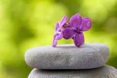 kwiatów zrównoważeni kamienie Zdjęcia Stock