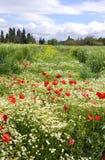 Kwiat łąka zdjęcia royalty free