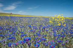 kwiat łąka Fotografia Stock