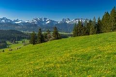 Kwiat łąka na wycieczkuje śladzie w Allgaeu Obraz Royalty Free
