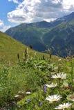 Kwiat łąki na Grossglockner Obrazy Stock