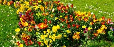 Kwiat łąki natura przy swój Best - zawijać up w mgle nostalgia - Fotografia Stock