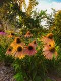 Kwiat łata zdjęcie stock