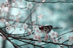 kwiat śliwki Obraz Stock