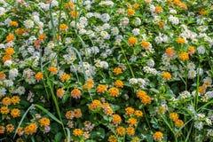kwiat światła playnig tło Zdjęcie Stock