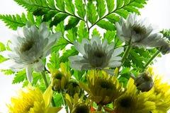 kwiat światła playnig tło Obrazy Royalty Free