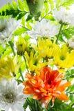 kwiat światła playnig tło Obrazy Stock