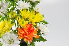 kwiat światła playnig tło Obraz Royalty Free