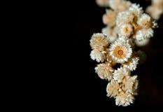 kwiat światła playnig tło zdjęcia royalty free
