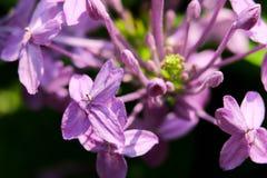 kwiat światła playnig tło Zdjęcia Stock
