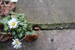 kwiat światła playnig tło fotografia royalty free