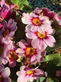 kwiat światła playnig tło Fotografia Stock
