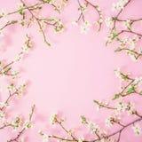 kwiat światła playnig tło Kwiecista round rama wiosna biali kwiaty na różowym tle Mieszkanie nieatutowy, odgórny widok zdjęcia royalty free