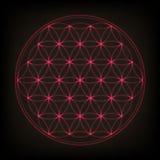 Kwiat życie Święta geometria, wektor Różowa neonowa wektorowa ilustracja ilustracji