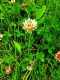 1 kwiat Zdjęcia Royalty Free