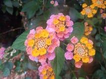 2 kwiat zdjęcia stock