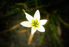 Kwiat 02 Zdjęcie Stock