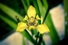 Kwiat 04 Zdjęcie Stock