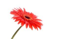 kwiat Zdjęcia Stock