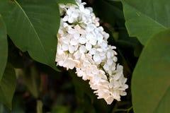 Kwiat 014 Fotografia Royalty Free