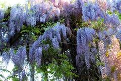Kwiat 010 Zdjęcia Stock