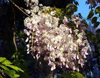 Kwiat 007 Fotografia Royalty Free