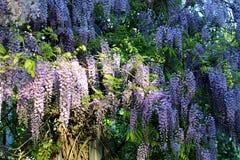 Kwiat 006 Zdjęcia Royalty Free