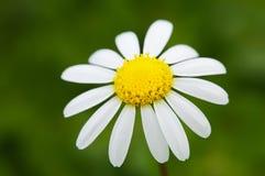 kwiat zdjęcia royalty free