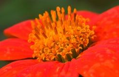 Kwiat 2 Fotografia Royalty Free