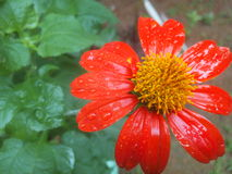 Kwiat Obrazy Stock