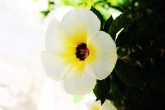 Kwiat Zdjęcie Stock