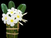 Kwiat Obraz Stock